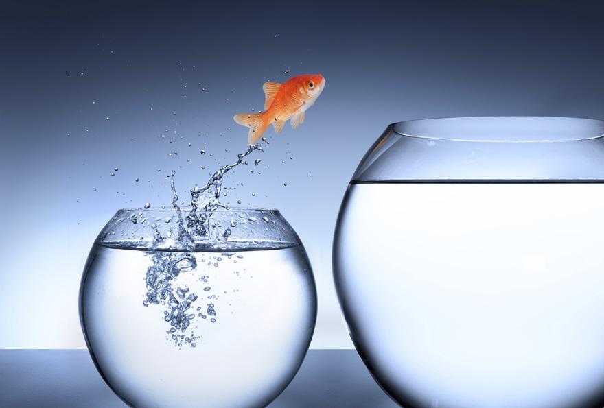 fisk hopper fra bowle.jpg Stort billede.jpg
